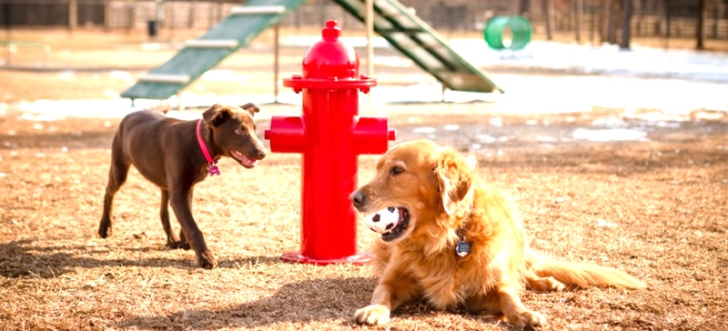Two Dogs near Fire Hydrant